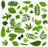 Todas as sortes das folhas verdes Imagens de Stock