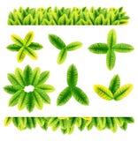 Todas las clases de hojas verdes Fotografía de archivo libre de regalías