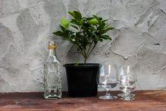 Todavía árbol de la vida con las botellas de cristal diferentemente formadas Imagen de archivo libre de regalías