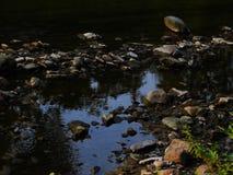 Todavía agua Imagen de archivo libre de regalías