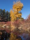 Todavía agua en otoño Fotos de archivo libres de regalías