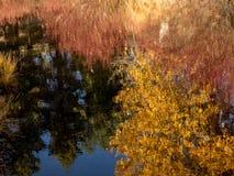 Todavía agua en otoño Foto de archivo libre de regalías