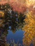 Todavía agua en otoño Fotografía de archivo libre de regalías