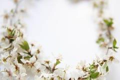 Todavía arreglo de la vida de flores Foto de archivo libre de regalías