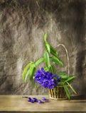 Todavía arte de la vida con la flor púrpura Foto de archivo libre de regalías