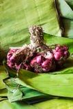 Todavía chalotes de la vida en las hojas del plátano Foto de archivo libre de regalías