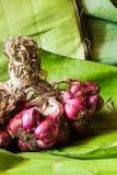 Todavía chalotes de la vida en las hojas del plátano Fotografía de archivo libre de regalías