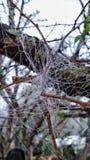 Todavía ciérrese encima del web de araña con vida de los insectos de los descensos de rocío de la mañana fotografía de archivo libre de regalías