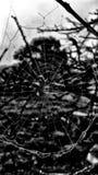 Todavía ciérrese encima del web de araña con vida de los insectos de los descensos de rocío de la mañana foto de archivo