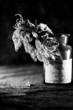Todavía composición de la vida con la flor secada del sol Imagenes de archivo