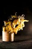 Todavía composición de la vida con la flor secada del sol Foto de archivo libre de regalías