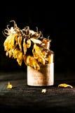 Todavía composición de la vida con la flor secada del sol Fotografía de archivo libre de regalías