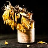 Todavía composición de la vida con la flor secada del sol Fotos de archivo libres de regalías