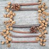 Todavía composición de la vida con los conos del pino y los palillos de madera Foto de archivo libre de regalías