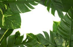 Todavía concepto tropical de la foto de la vida con el marco de la hoja del monstera a Foto de archivo