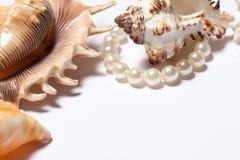 Todavía conchas marinas de la vida Imagen de archivo libre de regalías