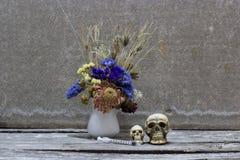 Todavía cráneo de la vida Fotos de archivo libres de regalías