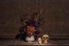 Todavía cráneo de la vida Foto de archivo