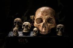 Todavía cráneo de la vida Fotografía de archivo