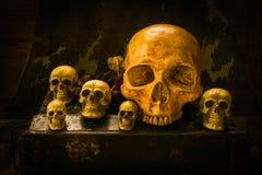 Todavía cráneo de la vida Imagenes de archivo
