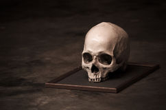 Todavía cráneo del ser humano de la vida Imagenes de archivo