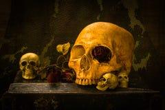 Todavía cráneo del soldado de la vida Imagen de archivo