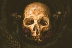 Todavía cráneo del soldado de la vida Imagenes de archivo