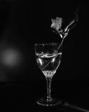 Todavía cristal blanco negro de la cristalería en un fondo negro Fotografía de archivo