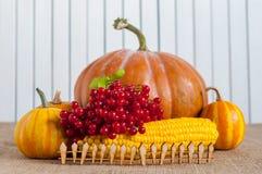Todavía de la acción de gracias vida - bayas, maíz y Imagen de archivo libre de regalías