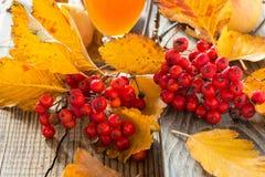 Todavía de la caída vida con el whitethorn y las manzanas Imagen de archivo libre de regalías