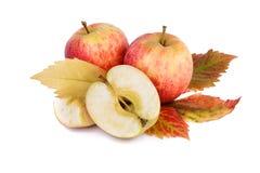 Todavía de la caída vida con las manzanas rojas y la hoja colorida Foto de archivo