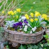 Todavía de la flor vida en el jardín Imágenes de archivo libres de regalías