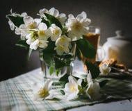 Todavía de la mañana vida con las flores frescas del jazmín Fotografía de archivo