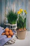 Todavía de la primavera vida con los huevos y el narciso Fotos de archivo libres de regalías