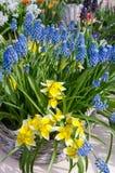 Todavía de la primavera vida maravillosa con las flores en una cesta de mimbre Foto de archivo