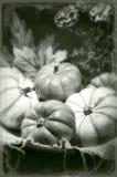 Todavía de las calabazas foto del tintype del vintage de la vida Foto de archivo