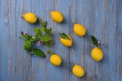 Todavía de los limones vida Imagen de archivo libre de regalías