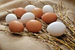Todavía de Pascua vida con los huevos y el sauce naturales de los lobos marinos de las ramas Imagenes de archivo