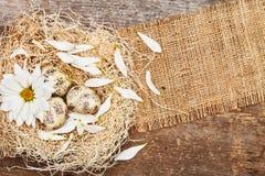 Todavía de Pascua vida de los huevos y de la flor de codornices en jerarquía Fotografía de archivo