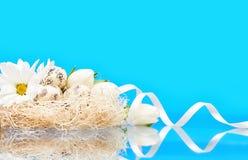 Todavía de Pascua vida de los huevos y de las flores de codornices Foto de archivo