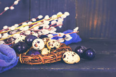 Todavía de Pascua vida Huevos de Pascua Fotos de archivo libres de regalías