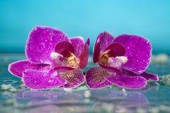 Todavía del balneario la vida con la orquídea y agua rosadas cae en una serenidad po Foto de archivo