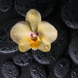 Todavía del balneario vida con la orquídea amarilla de la flor, phalaenopsis Fotografía de archivo