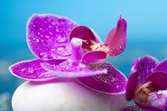Todavía del balneario vida con la orquídea rosada y el ZEN Stone blanco Fotos de archivo