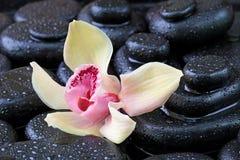 Todavía del balneario vida con las piedras calientes Imagen de archivo libre de regalías