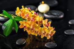 Todavía del balneario vida de la flor anaranjada floreciente de la orquídea de la ramita, hoja verde Imagen de archivo