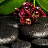Todavía del balneario vida de la flor de color morado oscuro hermosa de la orquídea, phalaenop Foto de archivo libre de regalías