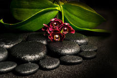 Todavía del balneario vida de la flor de color morado oscuro hermosa de la orquídea, phalaenop Imagen de archivo libre de regalías