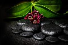 Todavía del balneario vida de la flor de color morado oscuro hermosa de la orquídea, phalaenop Fotos de archivo libres de regalías