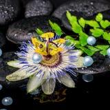 Todavía del balneario vida de la flor de la pasionaria, helecho de la rama, sto del basalto del zen Imagen de archivo libre de regalías